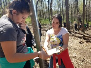 Measuring trees to calculate carbon sequestration